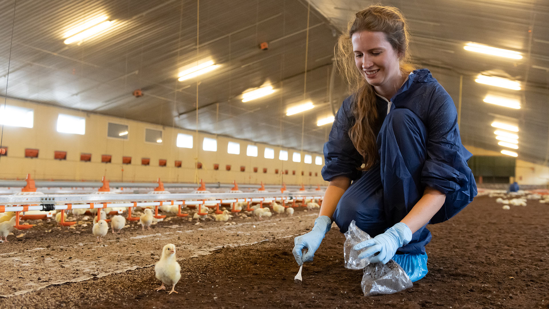 Monitor flock health with Evonik PLF